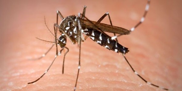 prevent mosquitos to breed
