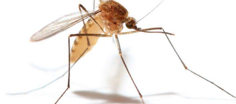 mosquito company cary