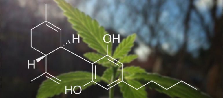 popularity of the CBD industry