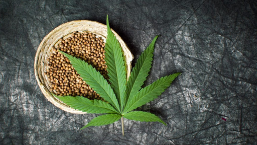 cannabis seeds of 2020?